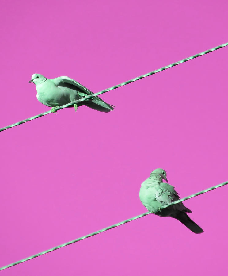Dove Duo in Pink by Judy Kennedy