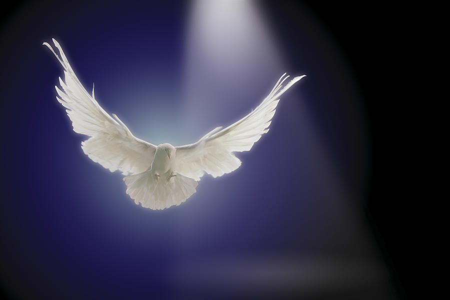 Dove Flying Through Beam Of Light Photograph by Comstock Images