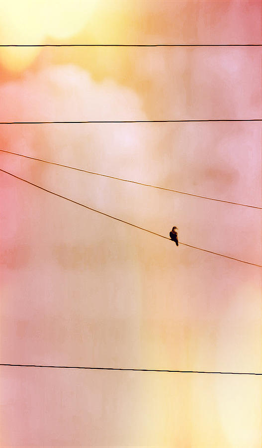 Dove on a Wire by Judy Kennedy