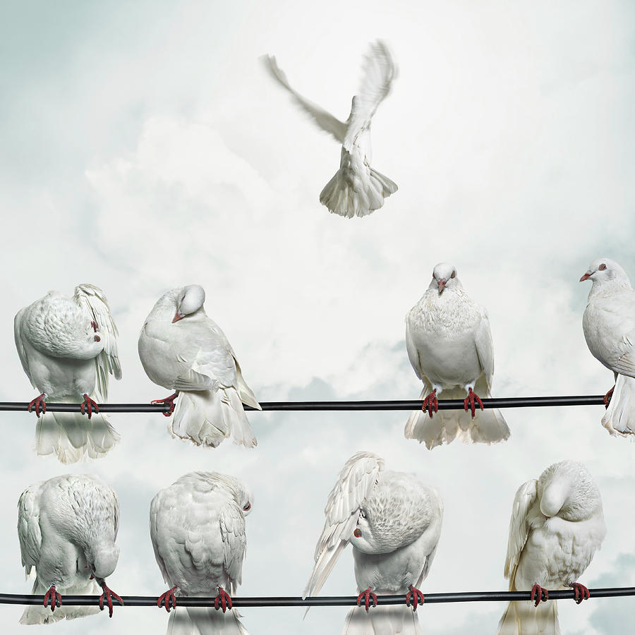 Doves Perched On Wires, One Flying Away Photograph by Gandee Vasan