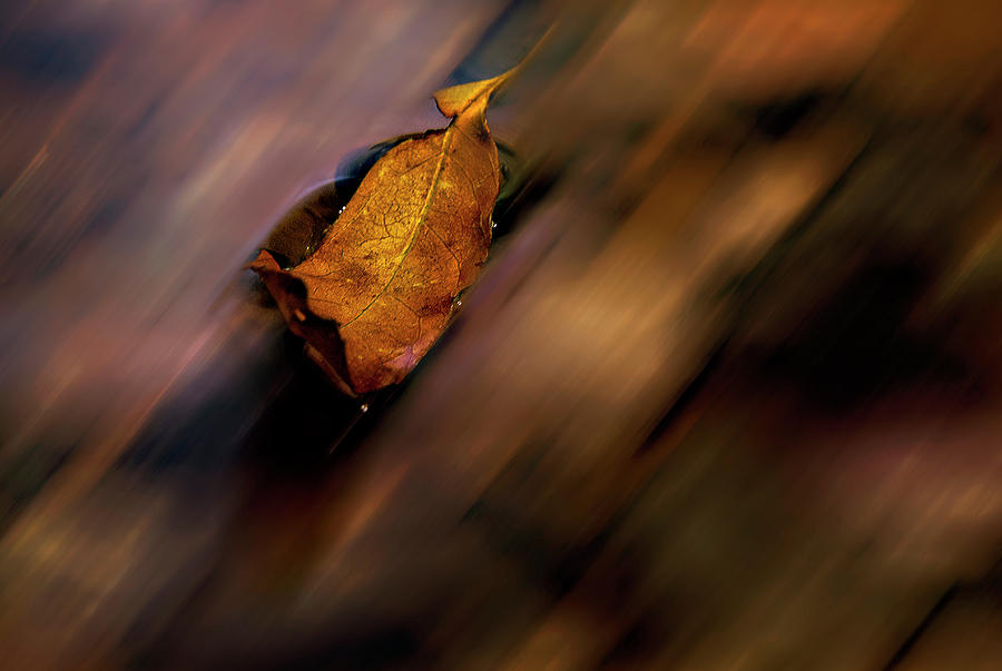 Downstream by Stephen Riella
