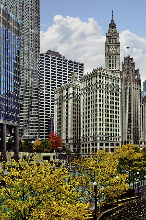 Downtown Chicago - Trees and Buildings by Carlos Alkmin
