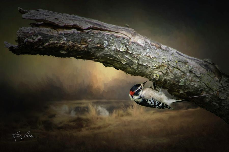 Downy Woodpecker by Randall Allen