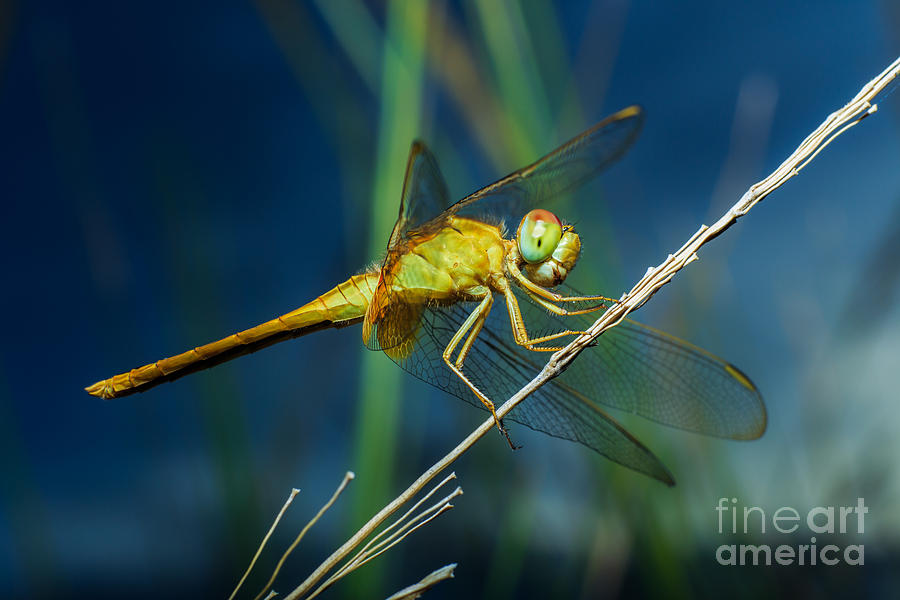 Forest Photograph - Dragonflies, Insects, Animals, Nature by Boyphare