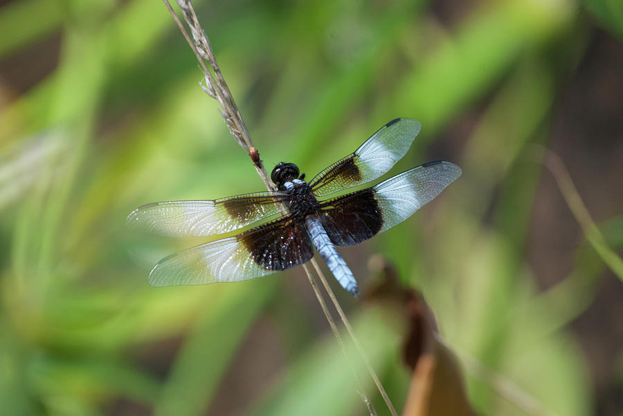 Dragonfly  9439 by G L Sarti