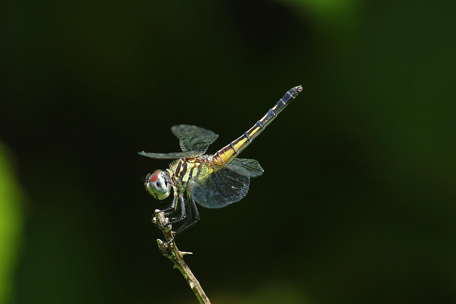 Dragonfly Photograph - Dragonfly by Brad Chambers