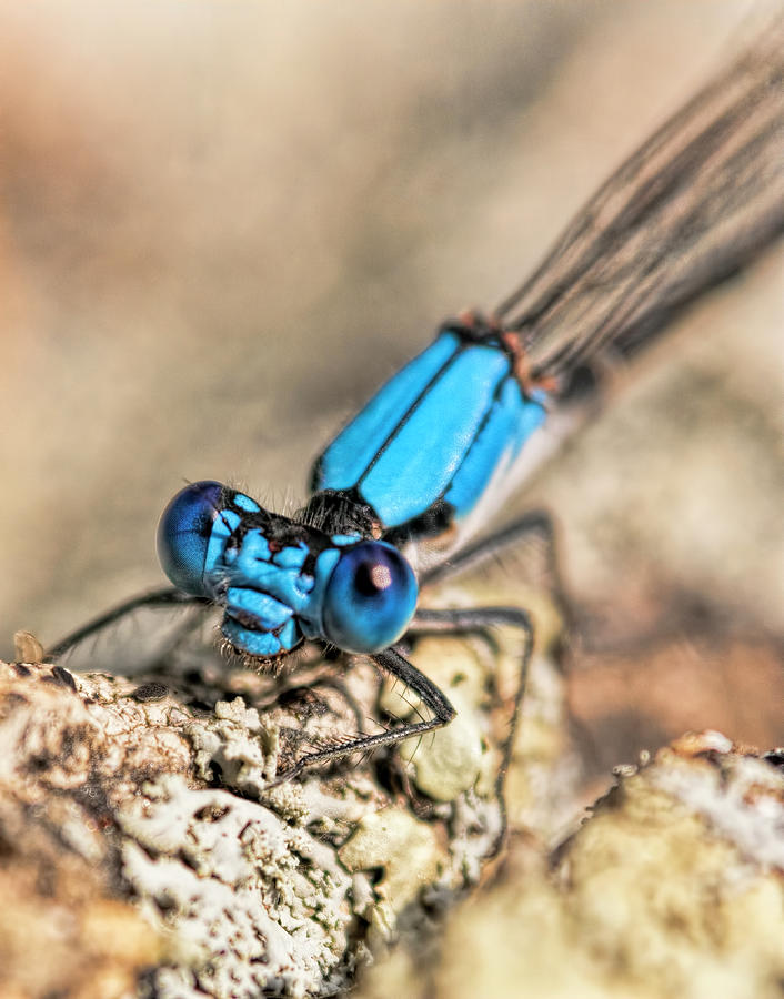 Dragonfly Close-up Photograph