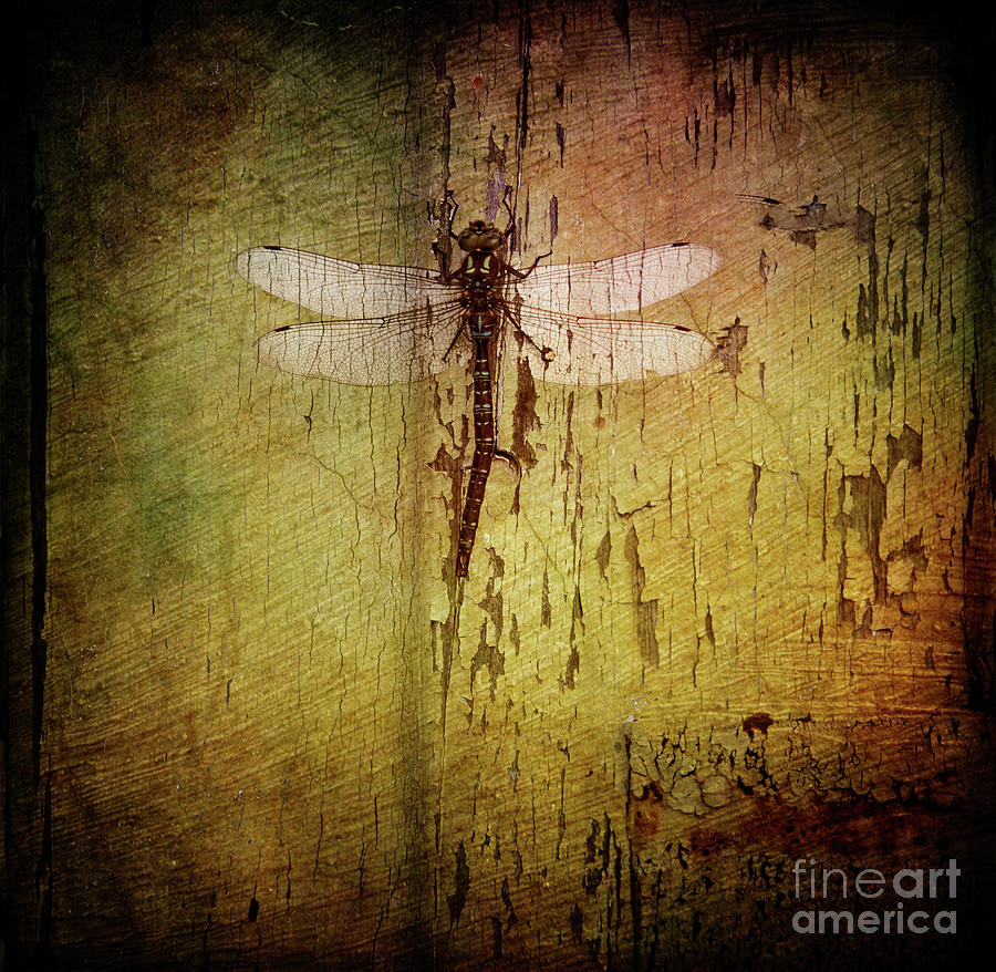 Dragonfly by Debra Fedchin