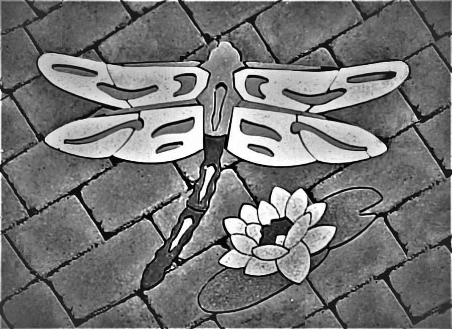 DRAGONFLY FLOWER B W by Rob Hans