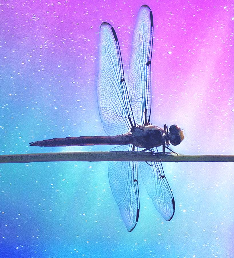 Dragonfly  by Gini Moore