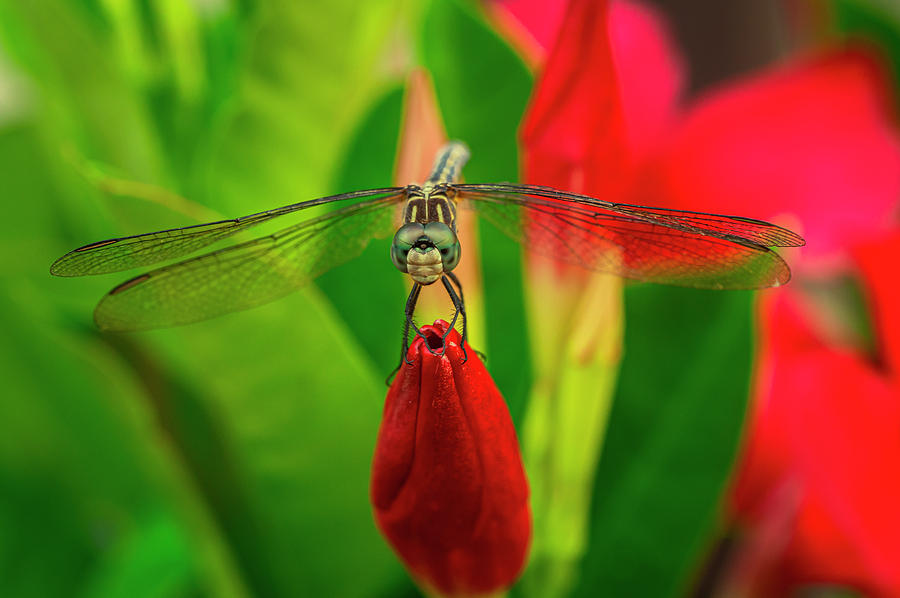 Dragonfly in Garden by David Kay