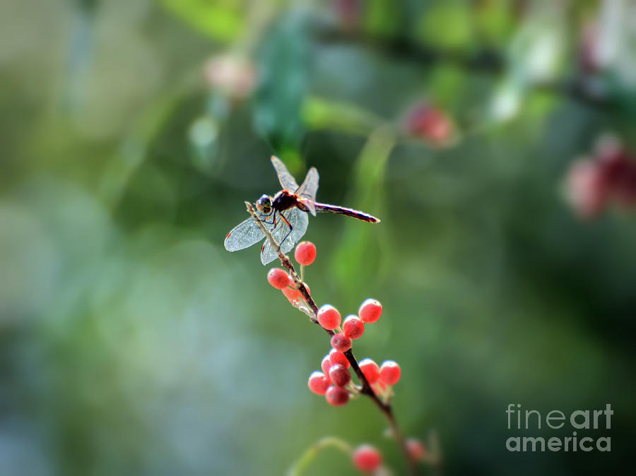 Dragonfly in the Berries by Kerri Farley