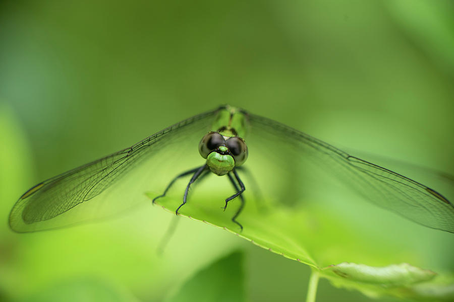 Dragonfly by Karen Rispin