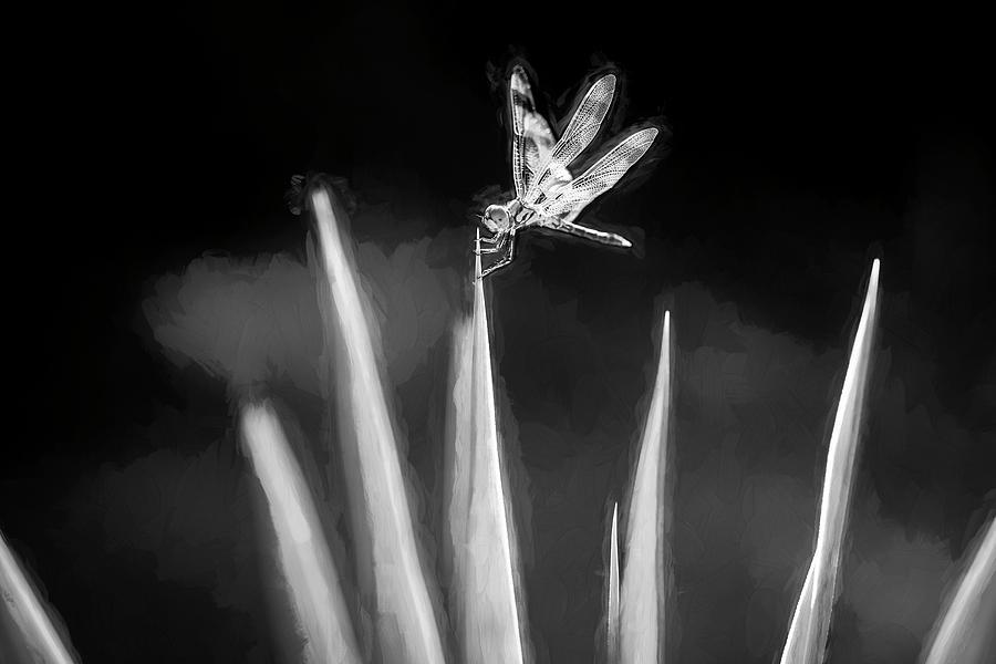 Dragonfly on Dracaena 103 by Rich Franco