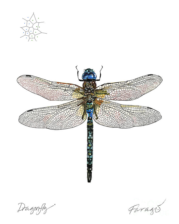 Dragonfly Drawing - DragonFly by Peter Farago