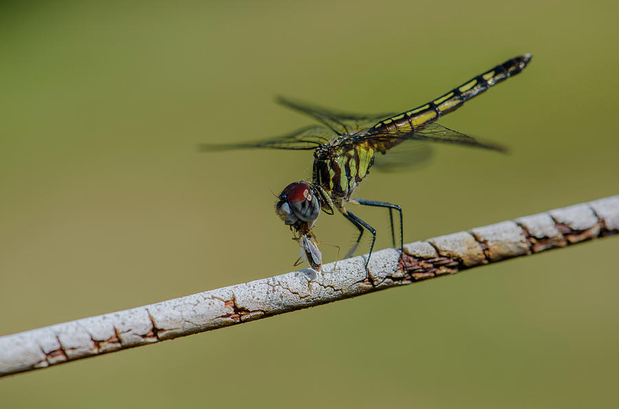 Dragonfly Treat by Linda Howes
