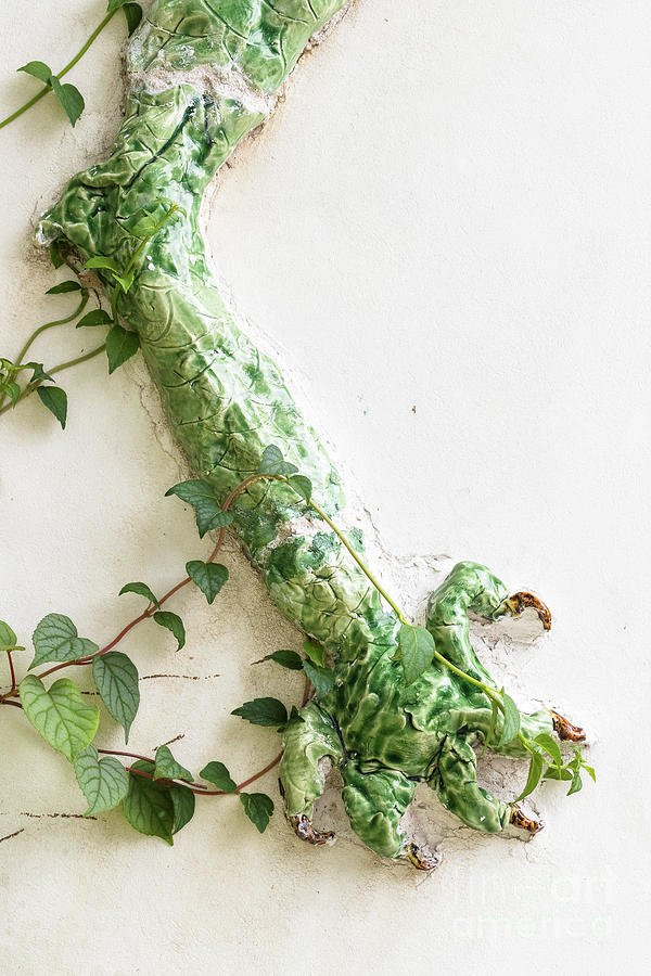 Botanical Gardens Photograph - Dragons Claw by Nicki Hoffman