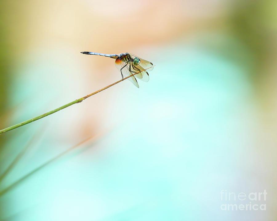 Dramatic Blue Dragonfly by Sabrina L Ryan