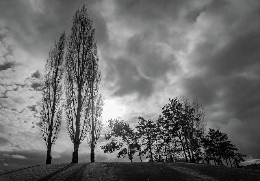 Dramatic Fall Trees by Dave Matchett