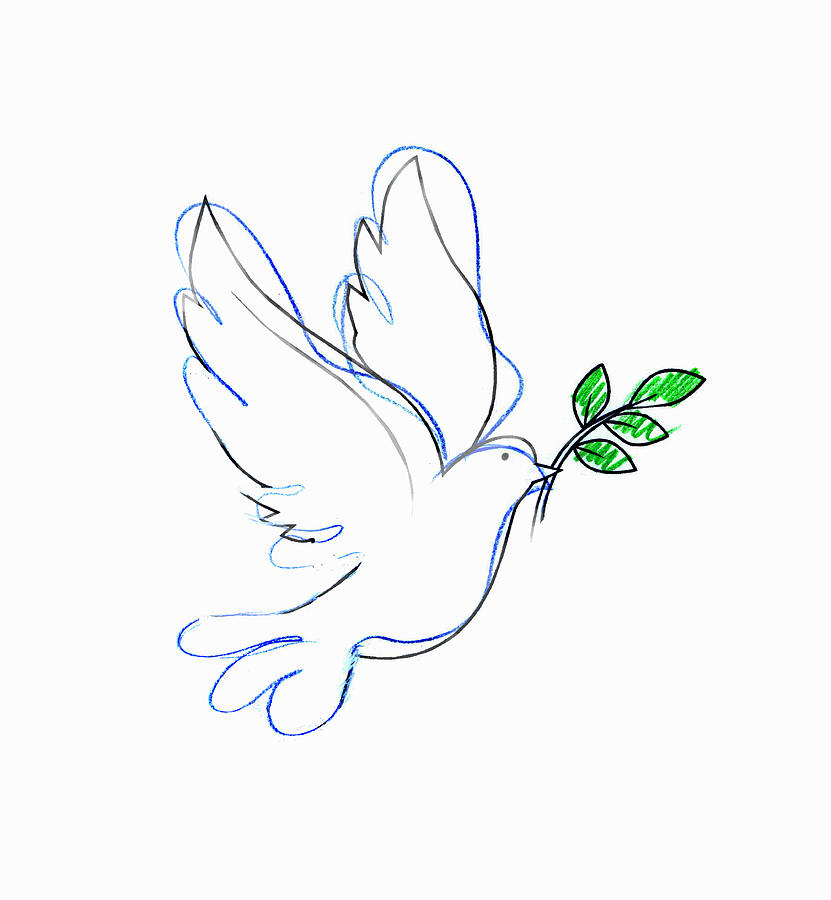 Drawing Of Dove Carrying Olive Branch Digital Art by Gary Waters