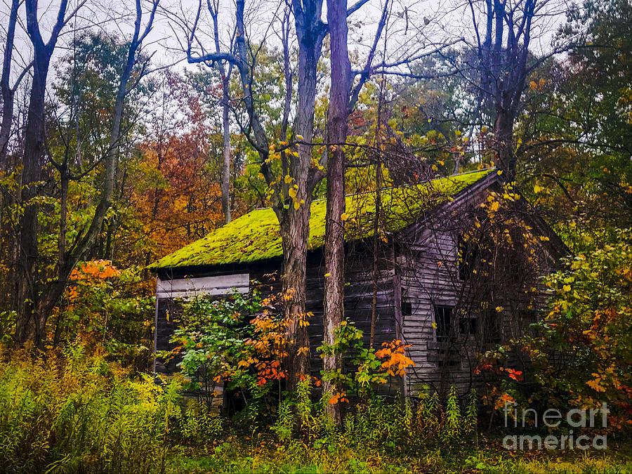 Dream Homestead Photograph