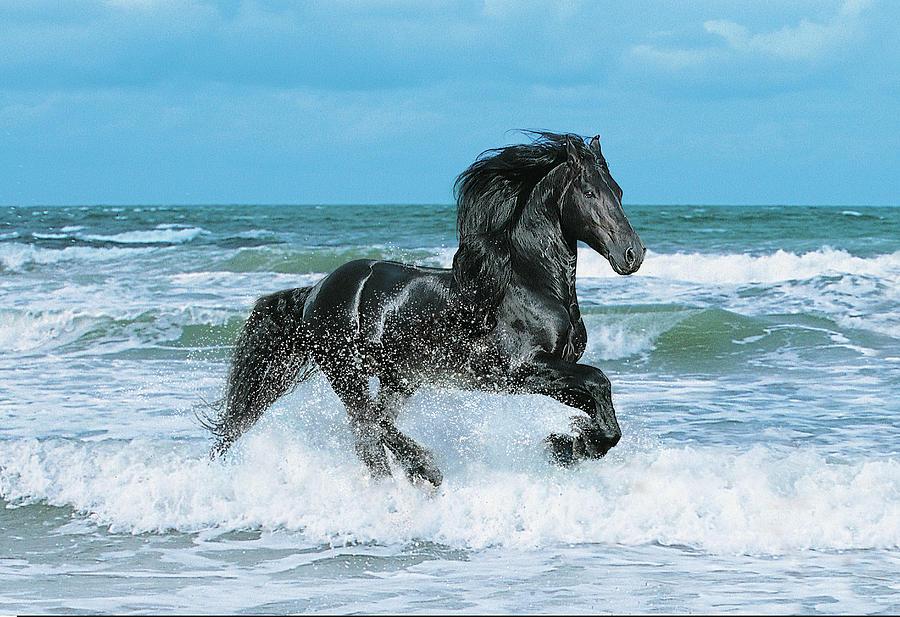 Animals Photograph - Dream Horses 011 by Bob Langrish