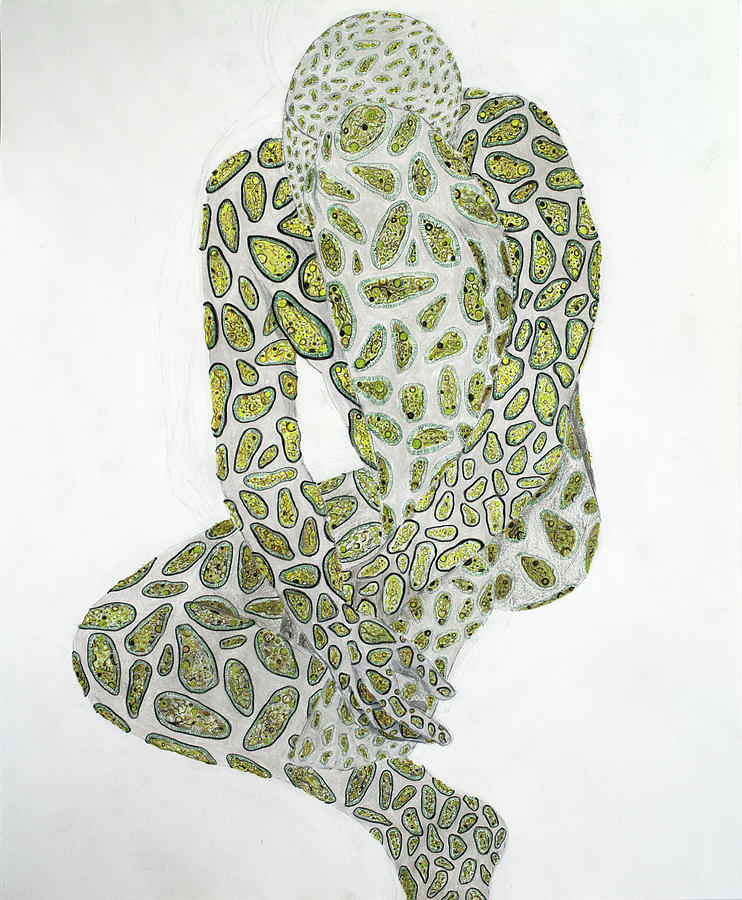 Amoeba 1 Drawing by Benjamin Hummitzsch