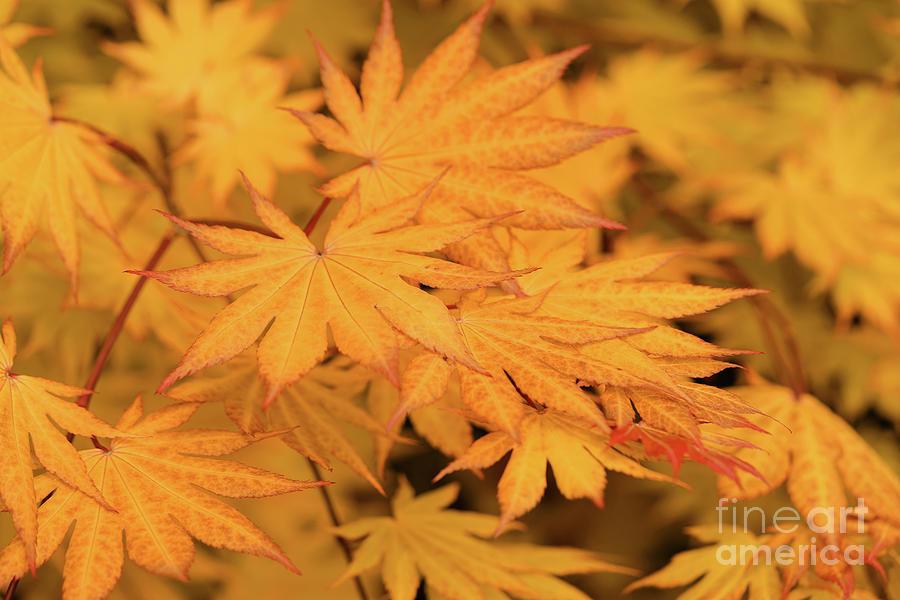 Fall Photograph - Dream Seeker by Rachel Cohen