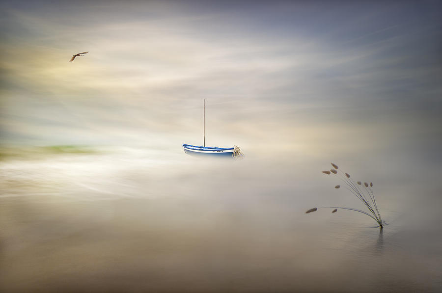Dreaming Of The Sea Photograph by Fran Osuna