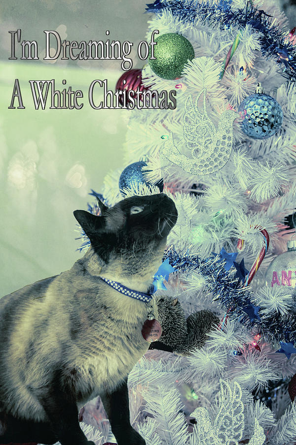 Dreaming Of White Christmas Mixed Media