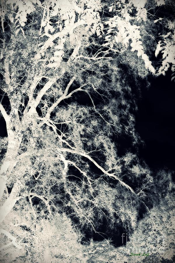 Dreaming Trees 2 Photograph