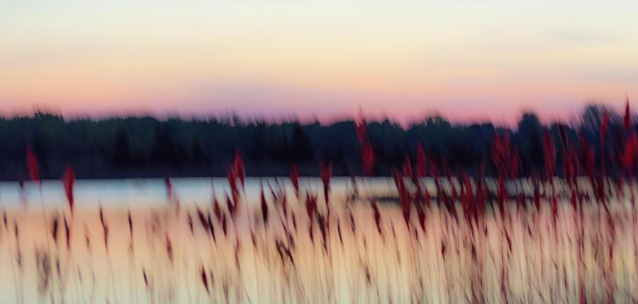 dreams of nature by Stewart Helberg