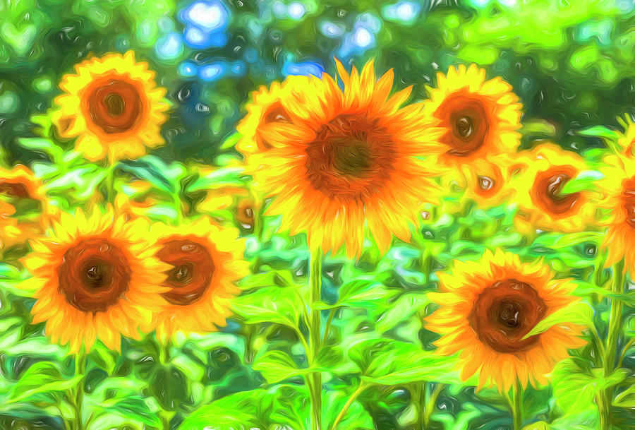 Dreams Of Sunflowers Photograph