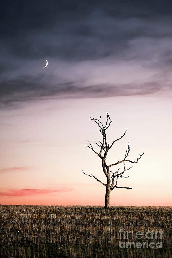 Dreams Of The Dead Tree Photograph