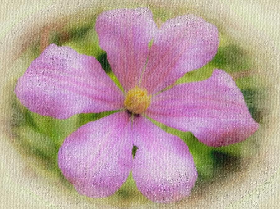 Dreamy Clematis 1 by Diane Lindon Coy