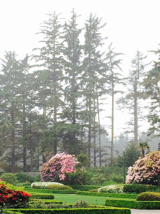 Dreamy Garden near the Sea by Michael Oceanofwisdom Bidwell
