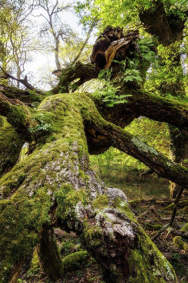 Dreamy tree by Matteo Viviani