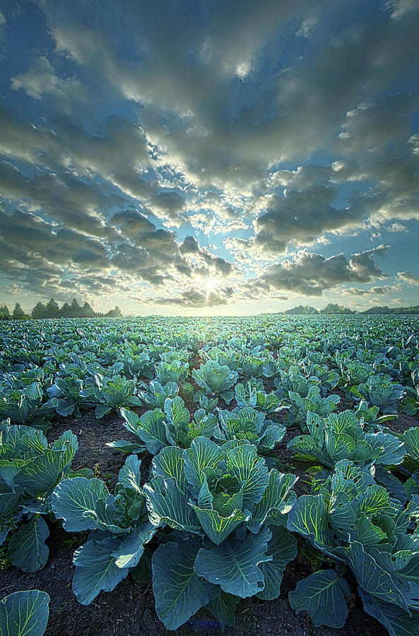 Dressed Up In Green by Phil Koch