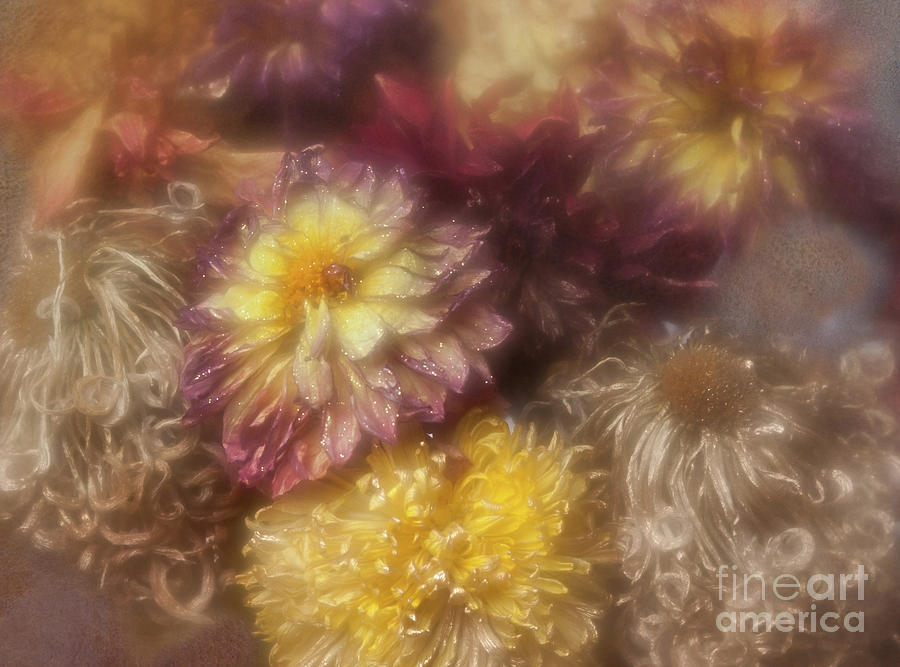 Dried Dahlias and Chrysanthemums From My Garden. by Ann Jacobson