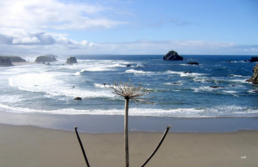 Dried Flower Seascape Photograph