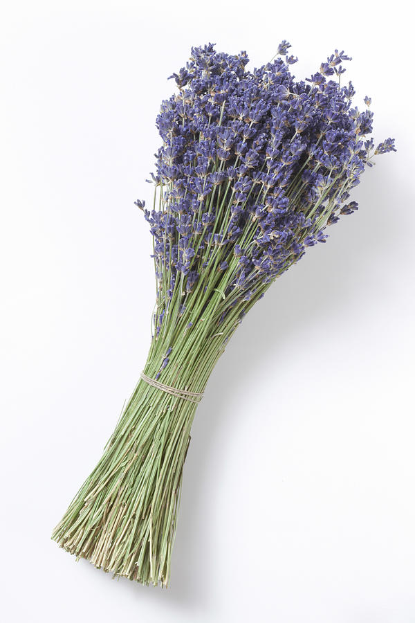 Dried Lavender Bunch, Elevated View Photograph by Westend61