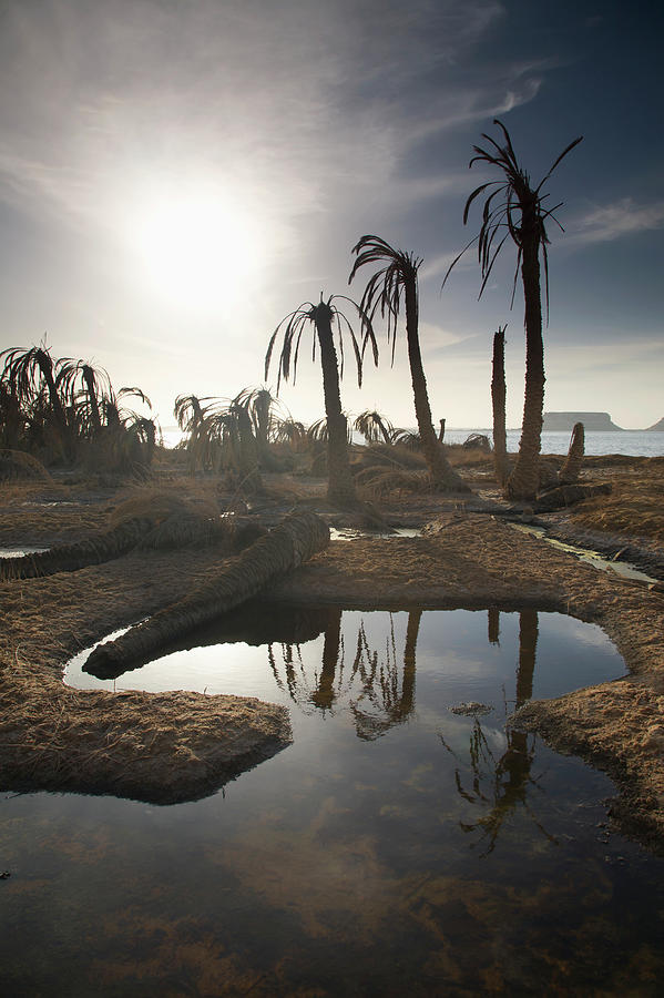 Dried Up Palm Trees And Salt Water On Photograph by Sean White / Design Pics