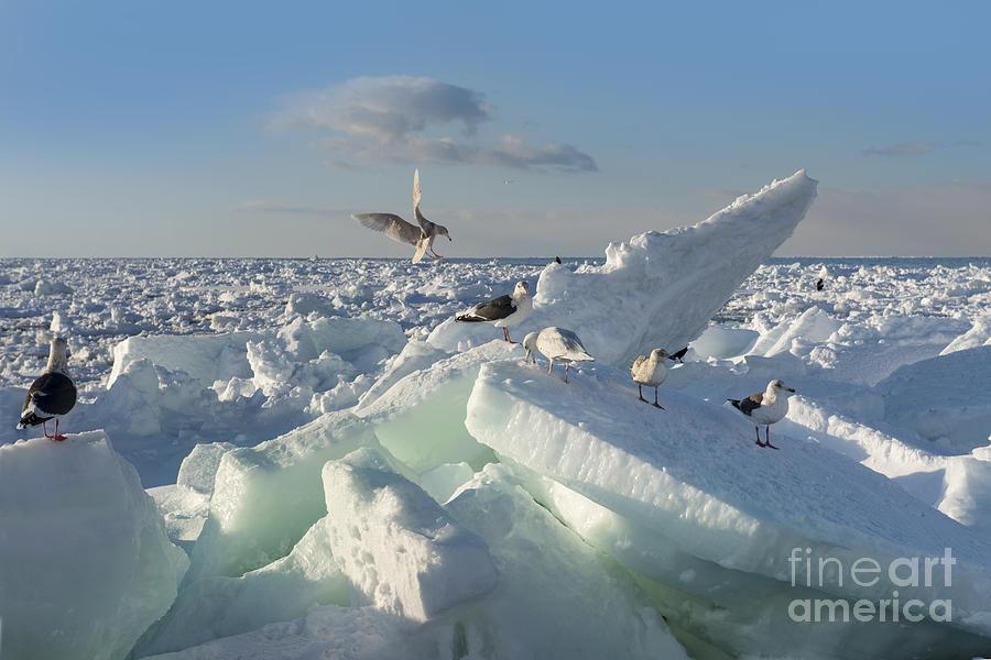Japan Photograph - Drift Ice In Shiretoko Hokkaido Japan by Zincreative