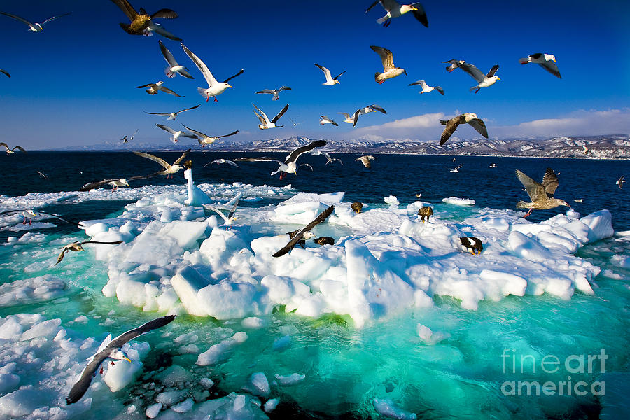 Untouched Photograph - Drift Ice by Kei Shooting