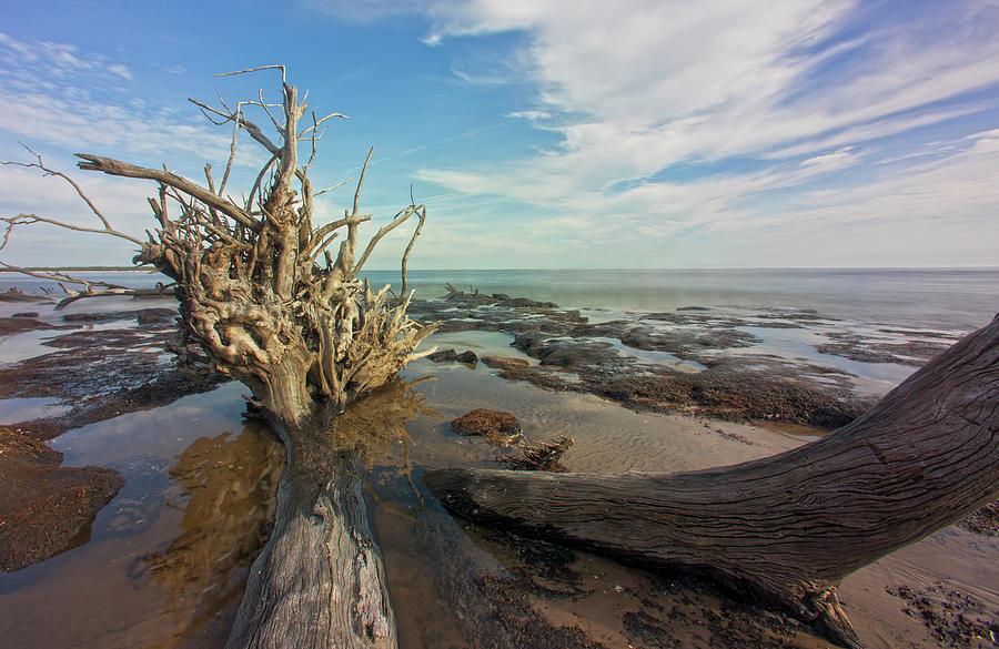 Drift Wood Beach by Robert Och