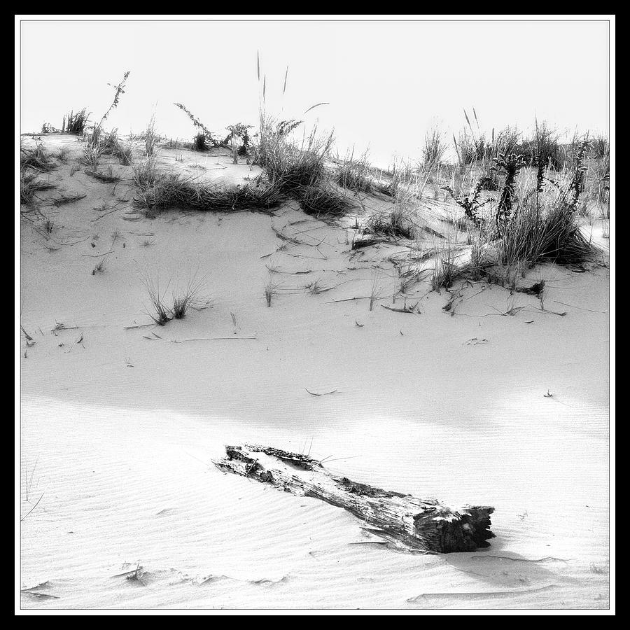 Driftwood And Dune Photograph by Harold Silverman - Beach, Palms & Lighthouses