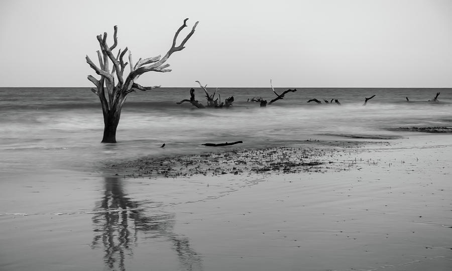 Driftwood and washed out trees at the beach on Hunting Island  by ALEX GRICHENKO