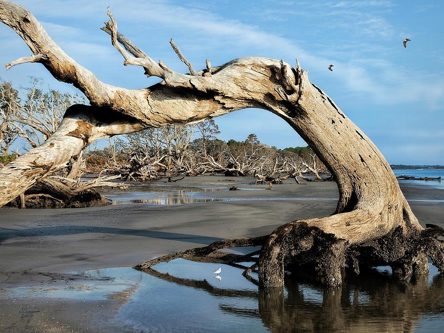 Driftwood Photograph - Driftwood Beach by Jim Ziemer