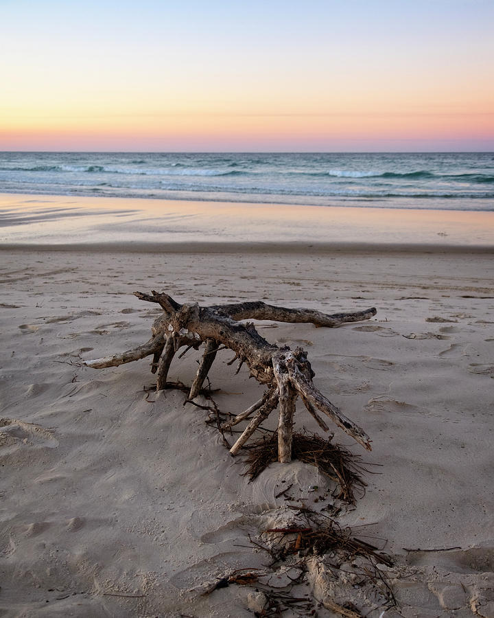 Driftwood by Catherine Reading