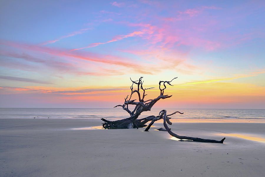 Driftwood dawn by Kenny Nobles